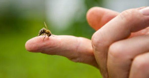 Τσίμπημα από μέλισσα: 4 φυσικές λύσεις αντιμετώπισης