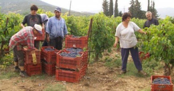 ΤΗΝ ΠΡΟΣΟΧΗ ΣΑΣ!!! Καλλιεργήστε γιατί χανόμαστε – Ανεκτίμητα προϊόντα της ελληνικής γης βγαίνουν από την αφάνεια και σας ΧΑΡΙΖΟΥΝ ΧΡΗΜΑ!