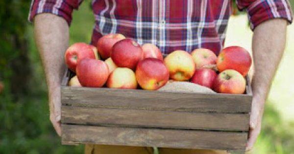 Τα 5 πιο σημαντικά οφέλη που έχουν τα μήλα στον οργανισμό