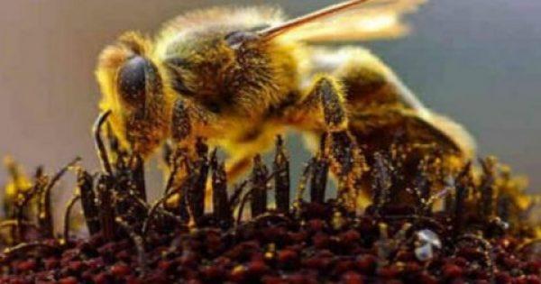 Το δηλητήριο της μέλισσας μπορεί να είναι το «κλειδί» για τη θεραπεία του καρκίνου