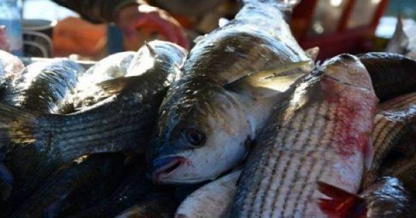 Τα 9 ψάρια που θα ήταν καλύτερο να τα αποφεύγετε…