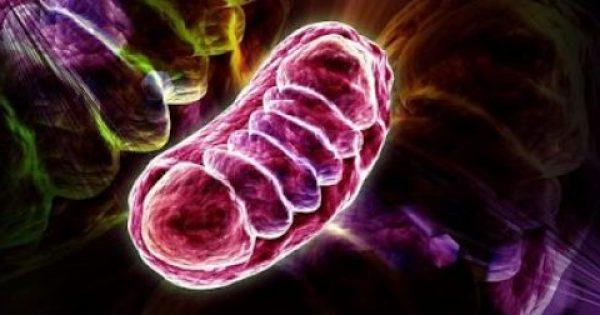Αντιοξειδωτικό ξανανιώνει τα αγγεία τουλάχιστον 15 χρόνια σε έξι εβδομάδες