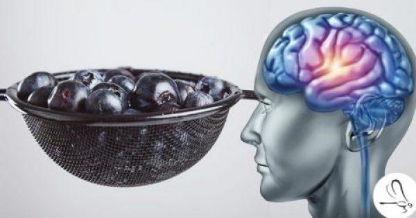 Νευρογένεση: Έρευνα απέδειξε πως μπορούμε να Αναπτύξουμε Νέα Εγκεφαλικά Κύτταρα, ανεξαρτήτου Ηλικίας!