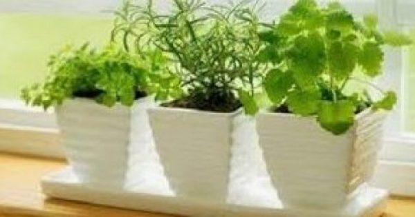 Tα 10 φυτά που προσελκύουν καλή τύχη και διώχνουν την αρνητική μας ενέργεια!