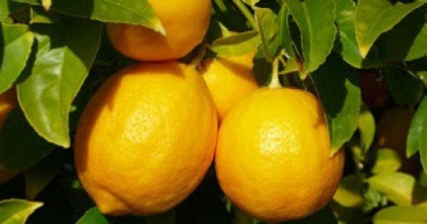 Ενα λεμόνι την ημέρα, τον γιατρό τον κάνει πέρα. Η ευεργετική δράση της λεμονάδας.