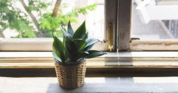 Φυτά εσωτερικού χώρου: Ποιά και γιατί ωφελούν την υγεία!!!