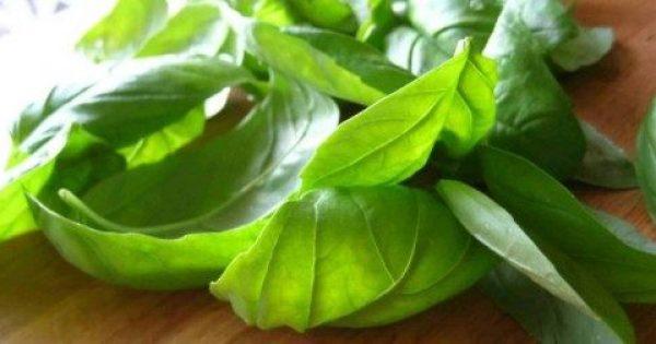 Διαβήτης: Τα ελληνικά βότανα που τον καταπολεμούν πιο αποτελεσματικά