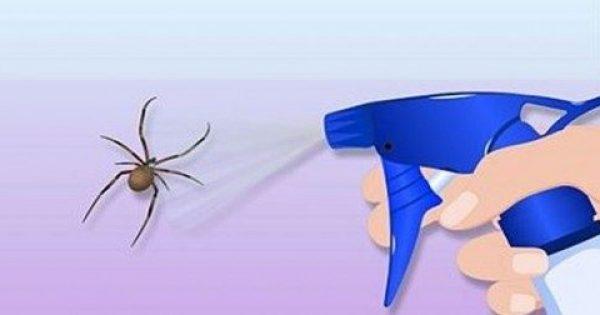 Έτσι θα απαλλαγείτε από κάθε είδους έντομα στο σπίτι χωρίς χημικές ουσίες