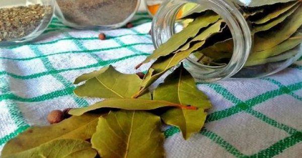 Τα φύλλα δάφνης κάνουν θαύματα. Τέλος οι πονοκέφαλοι και οι πόνοι στις αρθρώσεις με αυτές τις 2 σπιτικές συνταγές