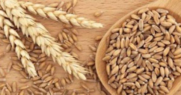Η αρχαία ελληνική διατροφή και το μυστικό συστατικό της η Ζέα