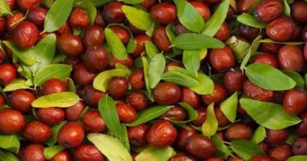 Είναι οι καρποί της τζιτζιφιάς το νέο superfood;