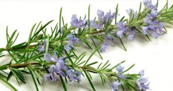 Αυτό το βότανο ενισχύει τη μνήμη κατα 75%