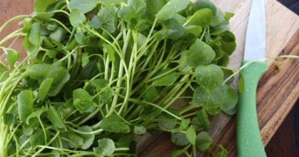 Το λαχανικό που ρίχνει πίεση και χοληστερίνη και προστατεύει από τον καρκίνο
