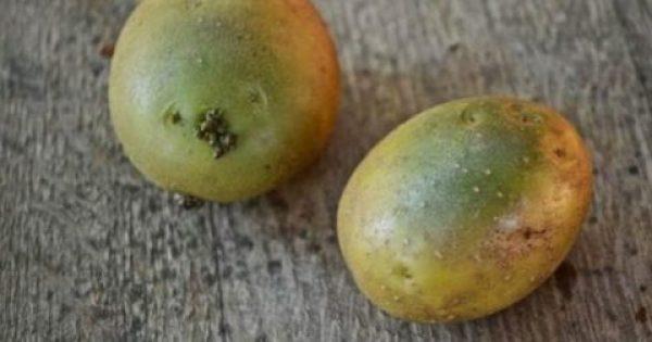 Πράσινα σημάδια στις πατάτες: Τι είναι. Ποιοι οι κίνδυνοι για την υγεία, προσοχή