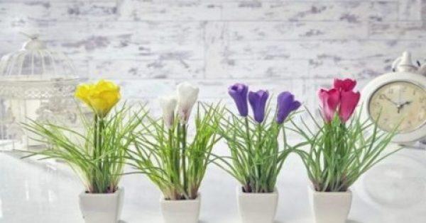 Δες πως ένα φίλτρο καφέ μπορεί να προστατέψει τα φυτά στο σπίτι σου