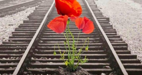 Οδυσσέας Ελύτης: «Την Άνοιξη αν δεν τη βρεις, τη φτιάχνεις»!!!