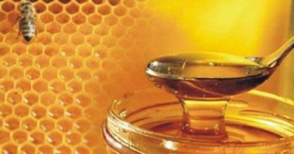 Έρευνα από το Α.Π.Θ. που εξέτασε 48 διαφορετικά μέλια – Δείτε ποιο είναι το καλύτερο για την υγεία μας!