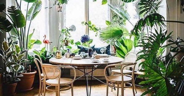 Φυτά για αρχάριους: Ποια είναι τα πιο ανθεκτικά και κατάλληλα για εσωτερικούς χώρους