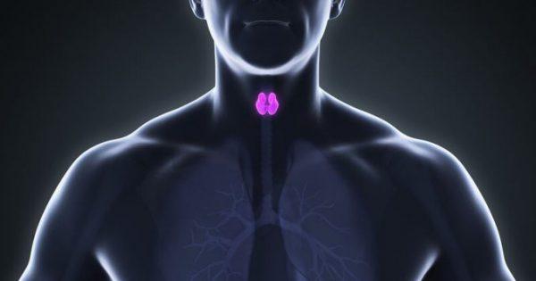 Θυρεοειδής: Πότε επιβαρύνει τη λειτουργία της καρδιάς!!!