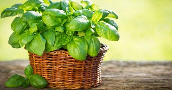 Τρία φυτά που επηρεάζουν θετικά την ψυχολογία σας στο σπίτι